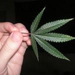 180px-Herbal